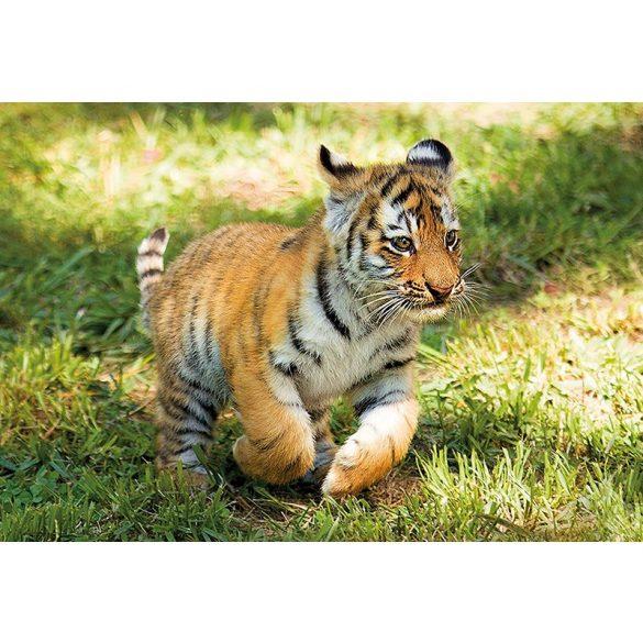 Puzzle 104 db-os - WWF Tigris kölyök - Clementoni (27998)