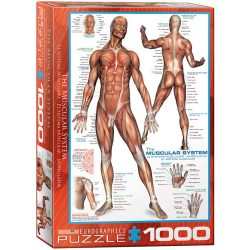 Eurographics 1000 db-os puzzle - Muscular System - 6000-2015