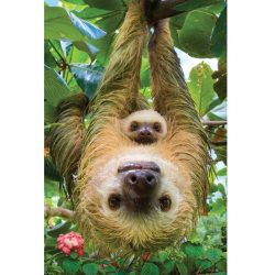 Eurographics 250 db-os puzzle - Save the Planet - Sloth 8251-5556