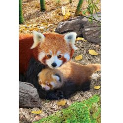 Eurographics 250 db-os puzzle - Save the Planet - Red Pandas 8251-5557