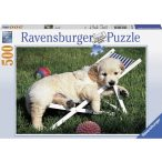 Ravensburger 500 db-os puzzle - Golden Retriever, Pihenés 14179