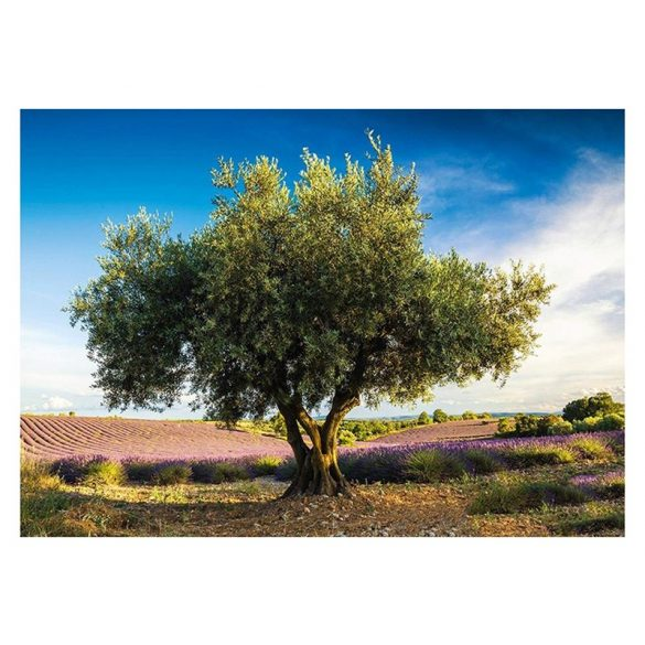 Puzzle 1000 db-os - Olive tree in Provence - Schmidt 58357
