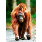 Trefl Nature Limited Edition - Orangután 1000 db-os puzzle (10514)